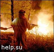 На восстановление сгоревшего в Ленобласти леса уйдут десятки лет