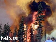 77% россиян считает вероятным повторение масштабных лесных пожаров