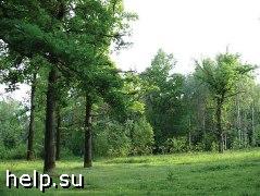 Активисты остановили вырубку леса на сутки