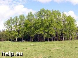 В Воронежской области возбуждено уголовное дело по факту вырубки 426 деревьев