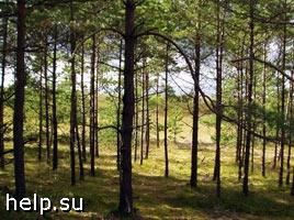Экологи купили лес