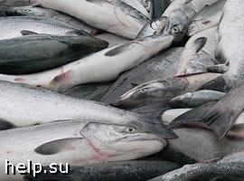 На Камчатке задержаны транспортные средства, перевозившие почти 100 тонн лосося