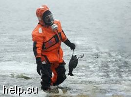 В Корякии обнаружено более 80 мертвых птиц