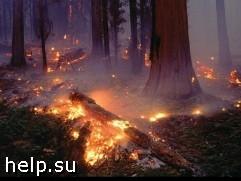 В Амурской обрасти введен режим ЧС из-за пожаров