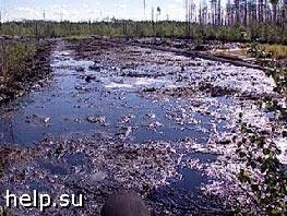 На Сахалине экологи выявили разливы нефти