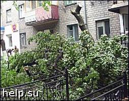 В Мурманске протестуют против вырубки деревьев