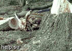 Прокуратурой возбуждено дело по факту незаконной вырубки деревьев