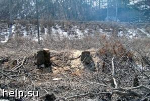 Жители подмосковного города Балашихи требуют защитить свой лес от вырубки