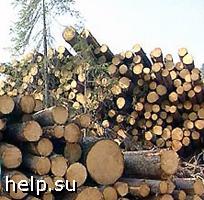 Жители г. Химки протестуют против вырубки 300-летней дубравы